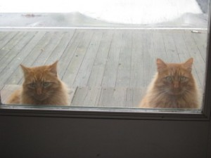Cats Waiting Patiently